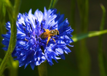 Pollen transporter