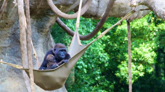 Mama and her babe in the hammock