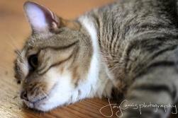 Did someone say catnip?