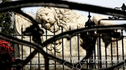 """""""Lion of Atlanta"""""""