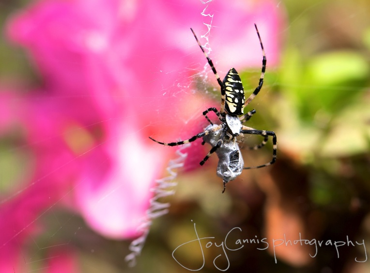 A Spider's Prey