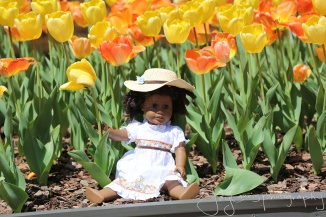 In the shade of the tulips