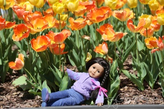 Tulip posing